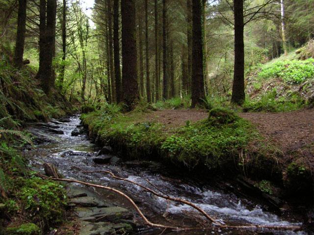 Stream In Cardinham Woods