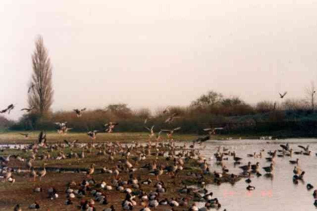 Wildfowl and Wetlands reserve, Slimbridge