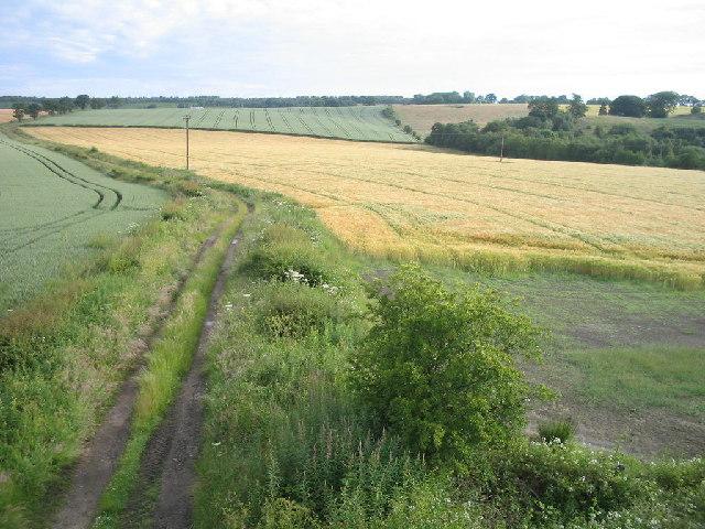 Ripening grain crops in West Fife