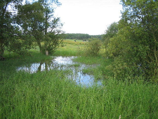 Pond at Burrowine Farm