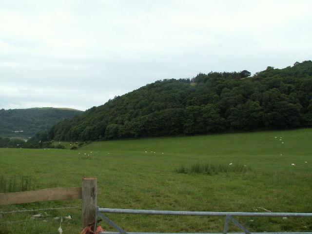 Woodland, Cribin Llwyd
