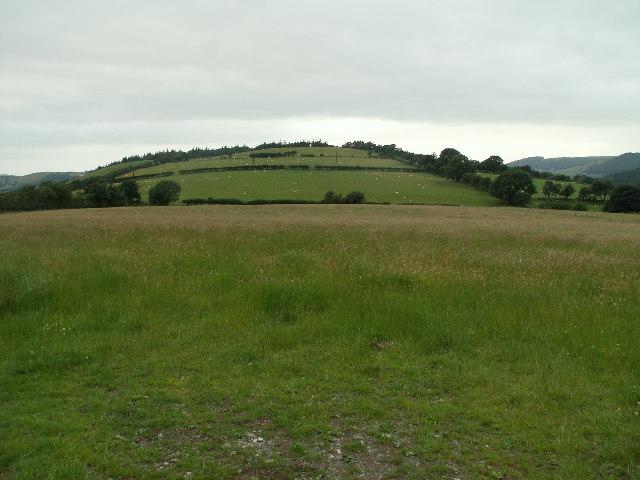 Pasture near Cefn Llwyd