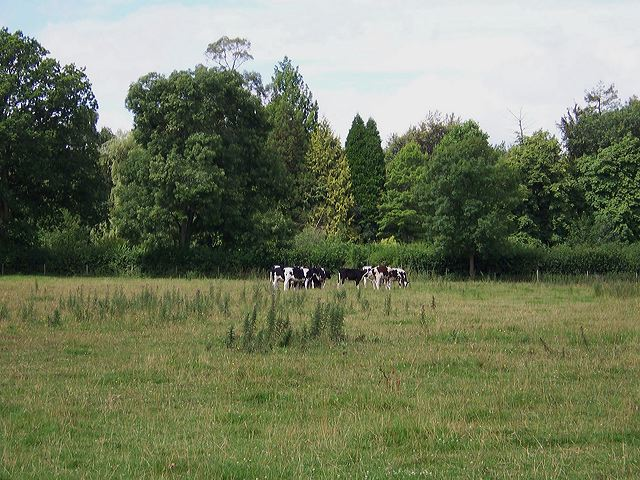 Lawsbrook meadow, Shillingstone, Dorset