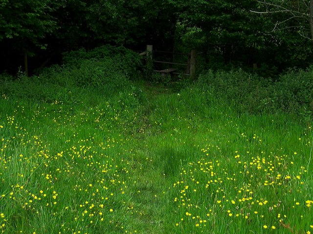 Lawsbrook field, Shillingstone, Dorset