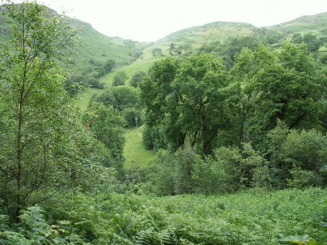 Woodland, Cwm Einion