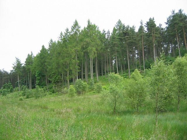 Deuchny Wood