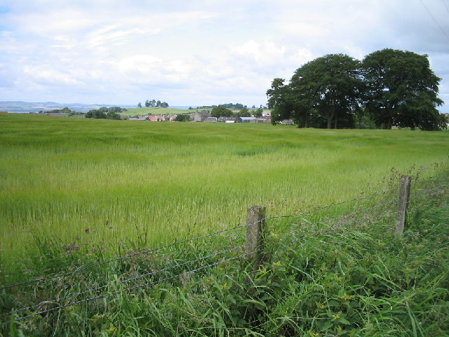 Barley growing on the outskirts of Dunfermline