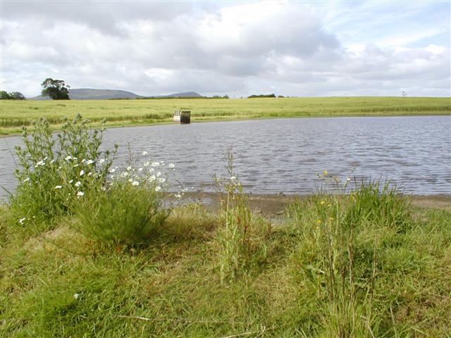Newly Developed Pond, Ayton Firs