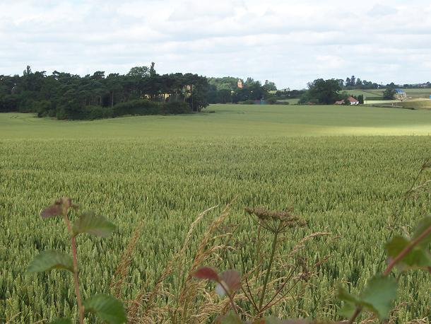 Field at Wishaw