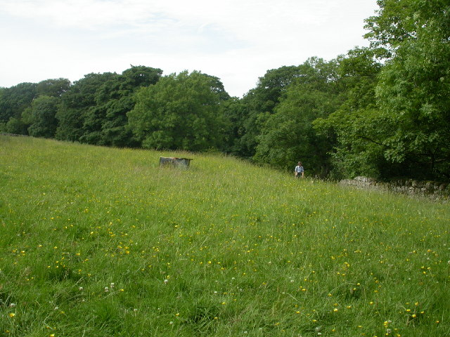Banks of the Ribble