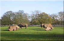 TL0017 : Whipsnade Zoo by Jack Hill