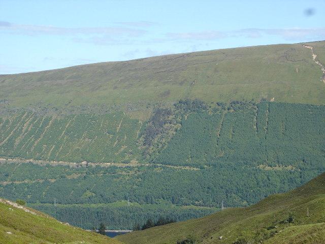 Forestry on East side of Loch Lochy ,Great Glen