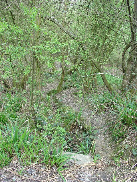 Deciduous Woodland, Southwater Country Park, Southwater, West Sussex