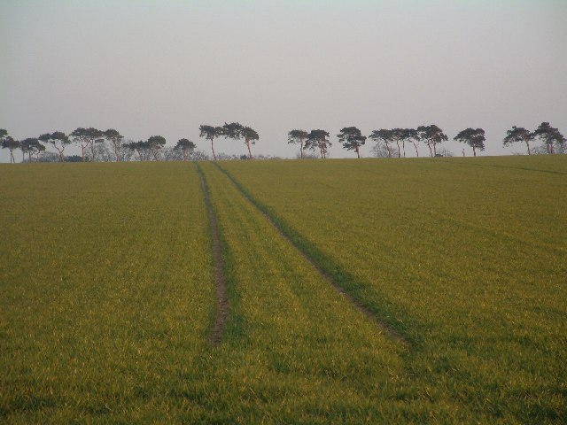 Field near Six Mile Bottom