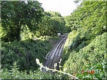 SX8855 : Railway near Greenaway by Richard Knights
