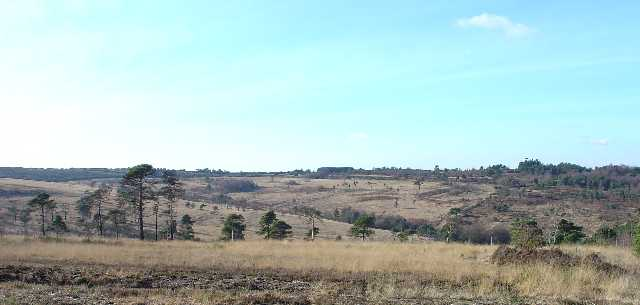 Ashdown Forest - Winnie The Pooh Territory