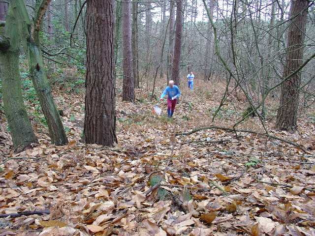 Orienteering in Tilgate Forest, Nr Crawley, West Sussex