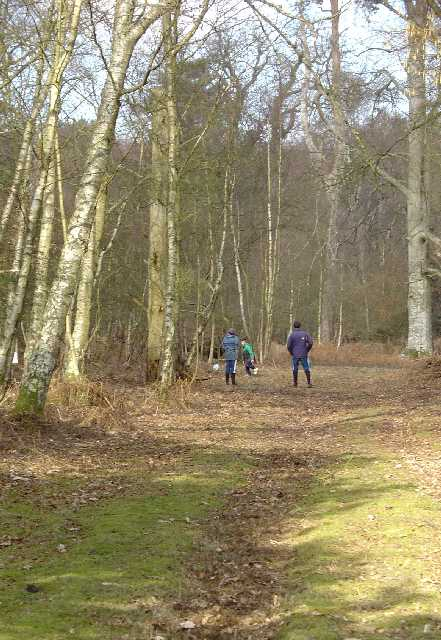 North Park Wood, Parham Estate, Nr Storrington, West Sussex