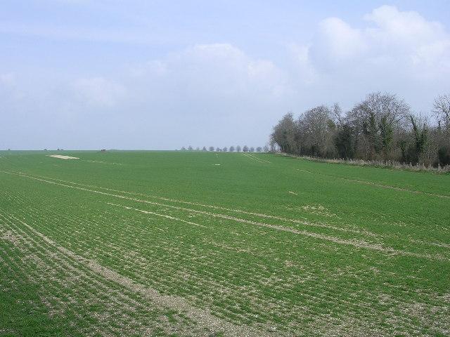 Course of the Dorset Cursus on Bottlebush Down