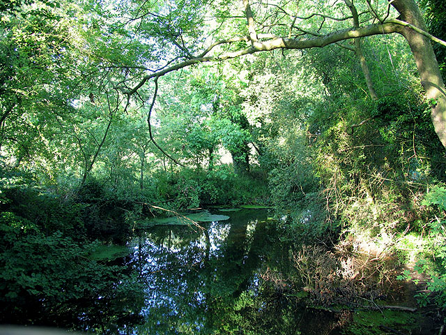 Branch of the Kennet River: Woolhampton
