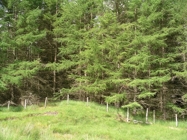 Leanachan Forest