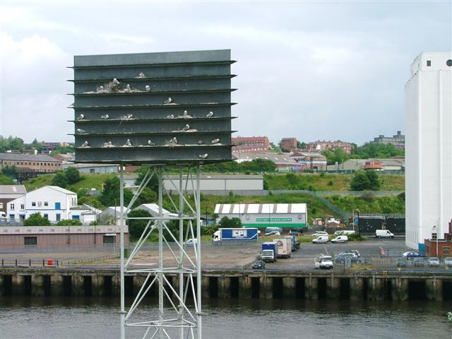 North Bank of the Tyne