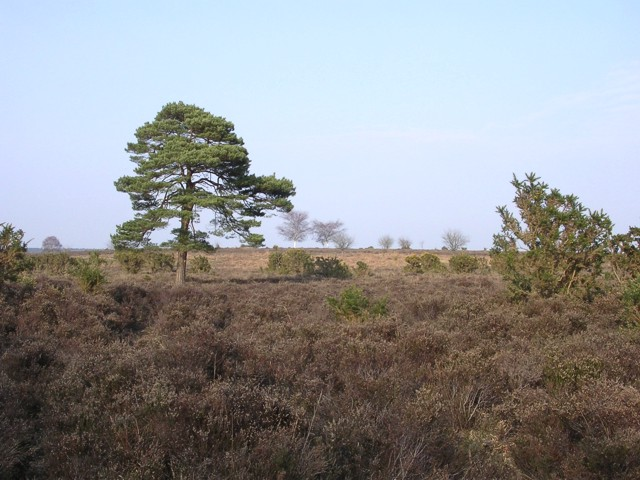 Heathland to the east of the Beaulieu River, near Rushbush