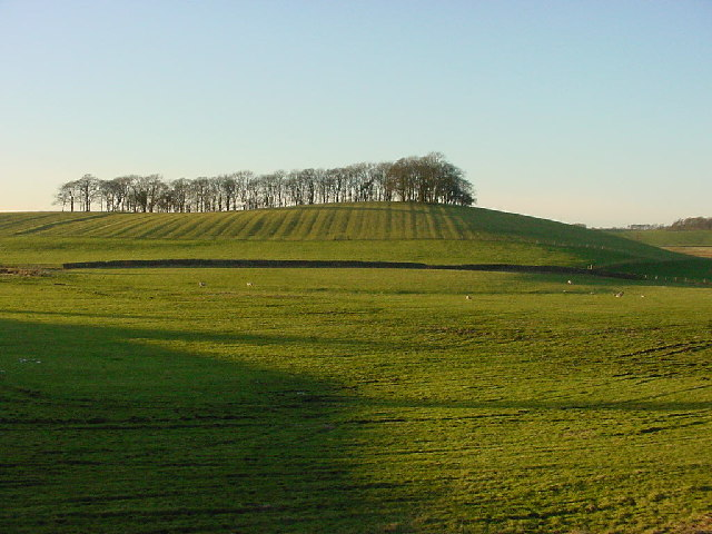 Copy Hill with Copse