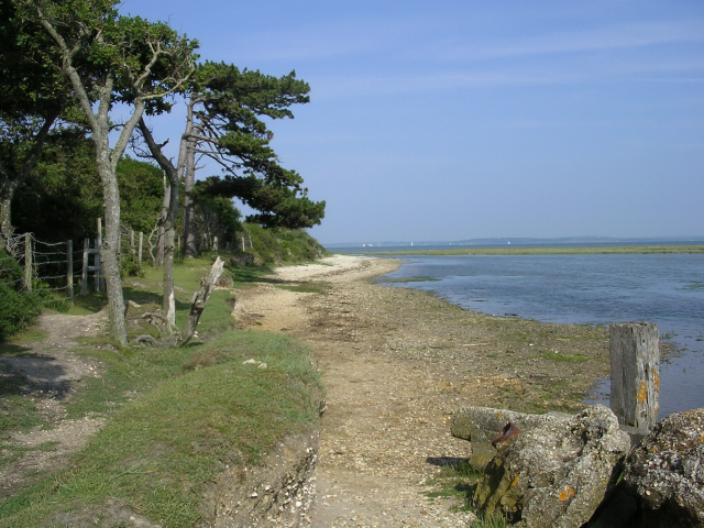 Tanners Lake and shore, New Forest