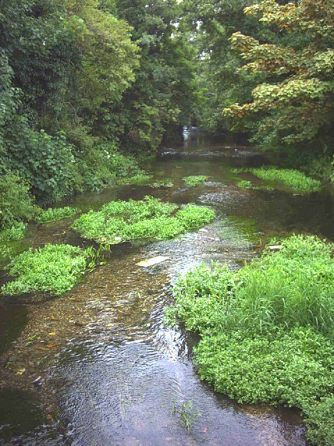 River Wandle from the Middleton Road bridge.