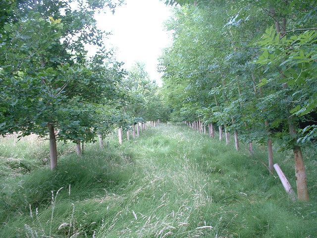 Part of a tree-lined public footpath
