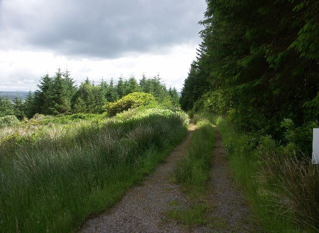 Forest track in Knapdale