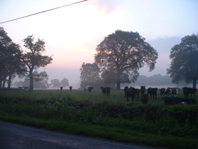 Sunrise at Irons Bottom