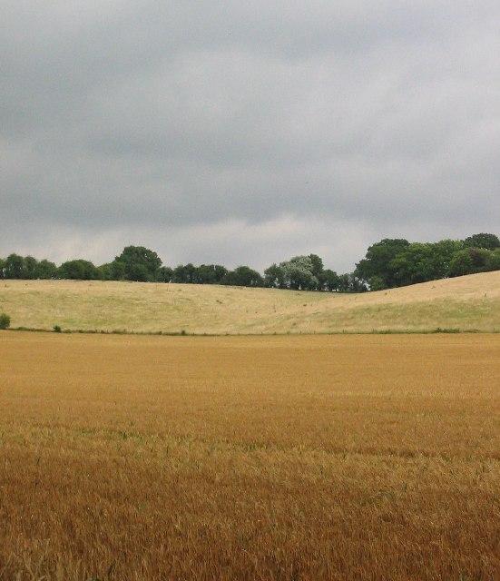 Corn Field, Battle Road
