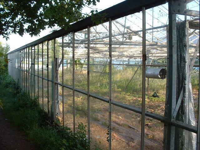 Derelict glasshouses NW of Dawlish