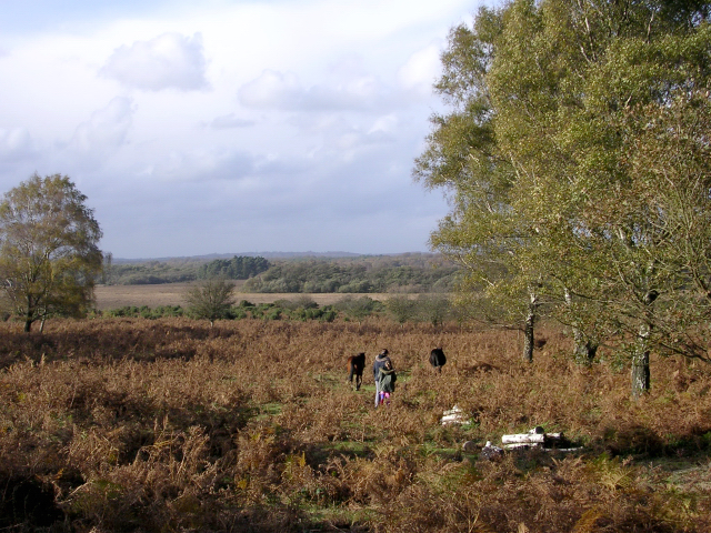 Matley Heath, west of Matley Wood, New Forest