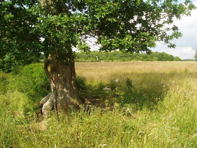 Freshfield Farm footpath
