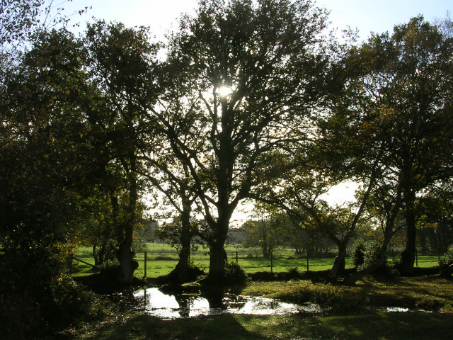 Boundary of Decoy Pond Farm on Yew Tree Heath, New Forest