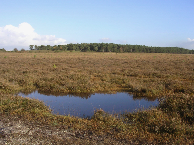 Yew Tree Heath, north of the Beaulieu river, with the Ipley Inclosure in the distance