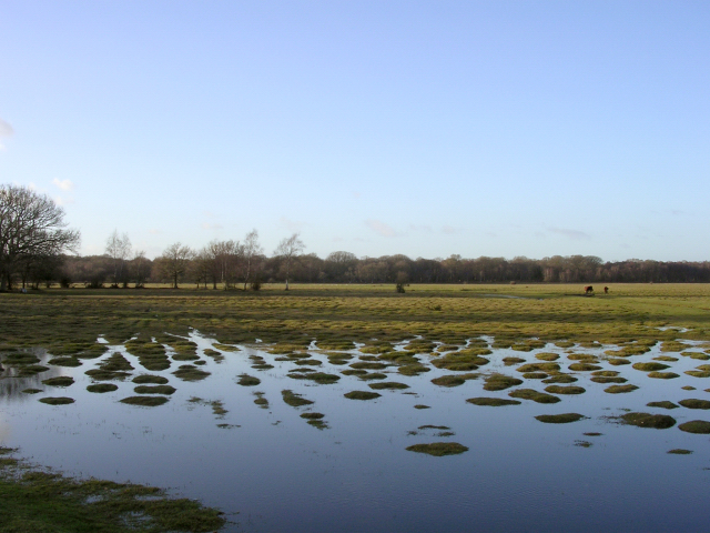 Winter flooding on Balmer Lawn, New Forest