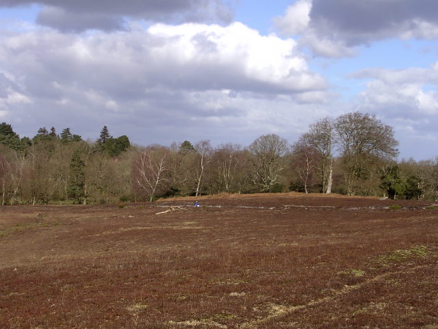 Matley Heath's ancient earthworks and trees alongside the Beaulieu River, New Forest