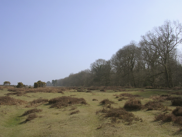 Edge of Wilverley Inclosure, New Forest