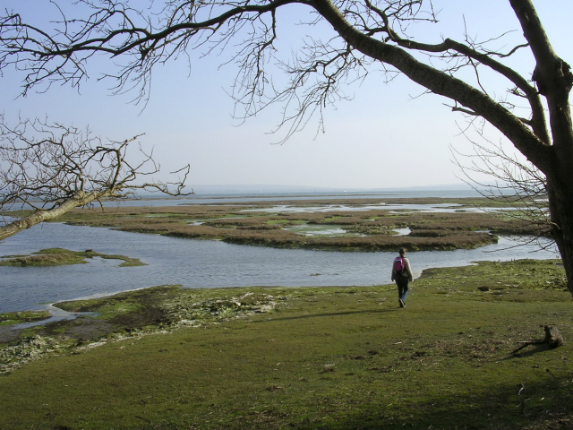 Pylewell Shore:  mudflats and saltmarsh by the Solent
