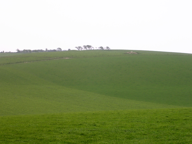Verdant pasture south of the A35 between Martin's Down and Black Down