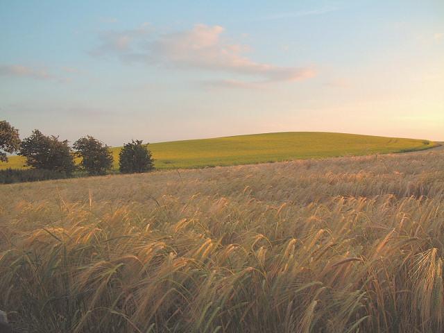 barley, bio-diesel and blue skies in Billinge
