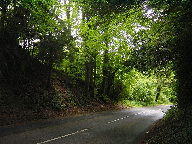 Hollingbourne Hill