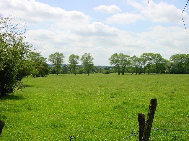 Meadow in Hollingbourne
