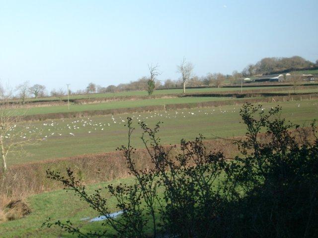 Grove Farm, north of Swindon.