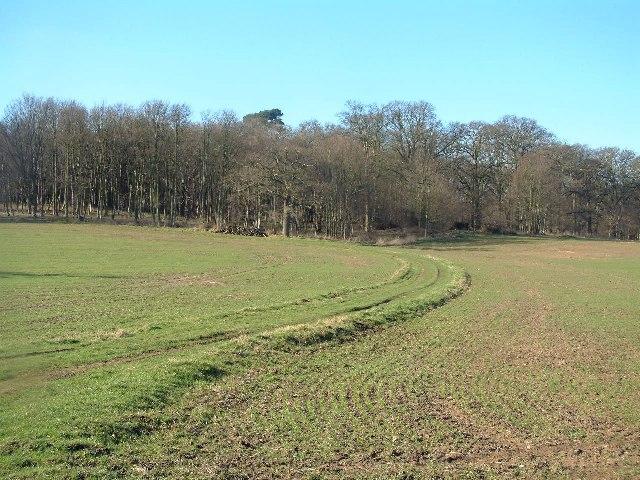 Dairy Wood, Ickworth Park