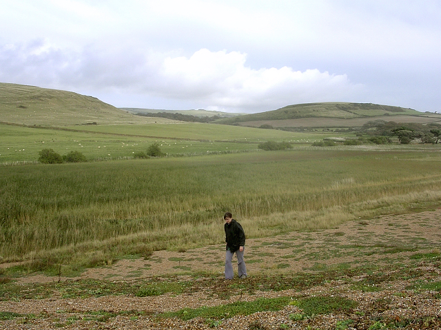 Reed beds at the northwestern end of the Fleet, behind Chesil Beach